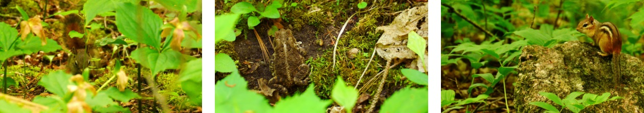 Squirrel, Toad and Chipmunk