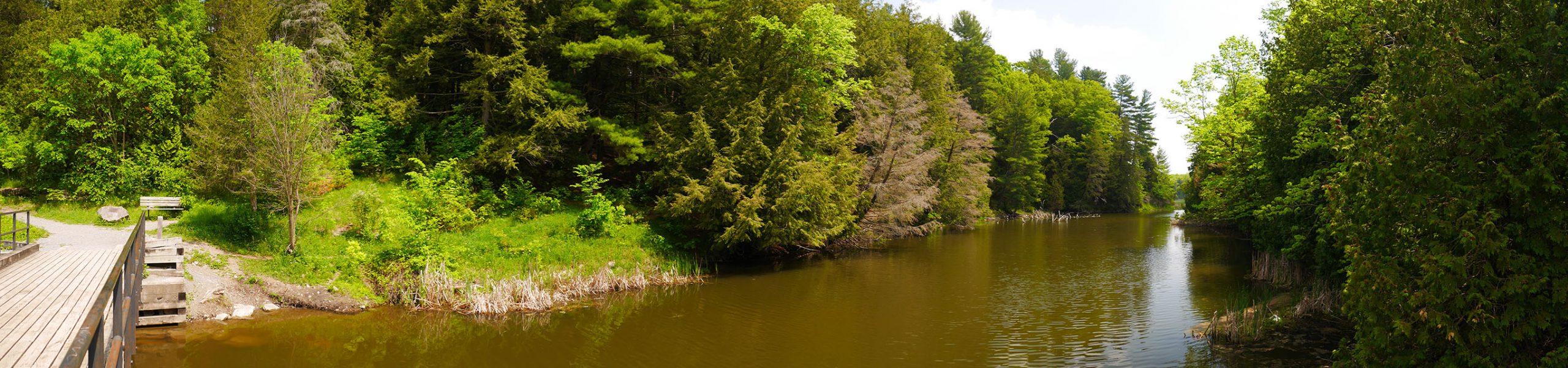 Bridge over the stream at Parrott's Bay