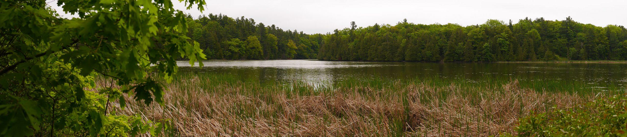 View of wetlands at Parrott's Bay Conservation Area