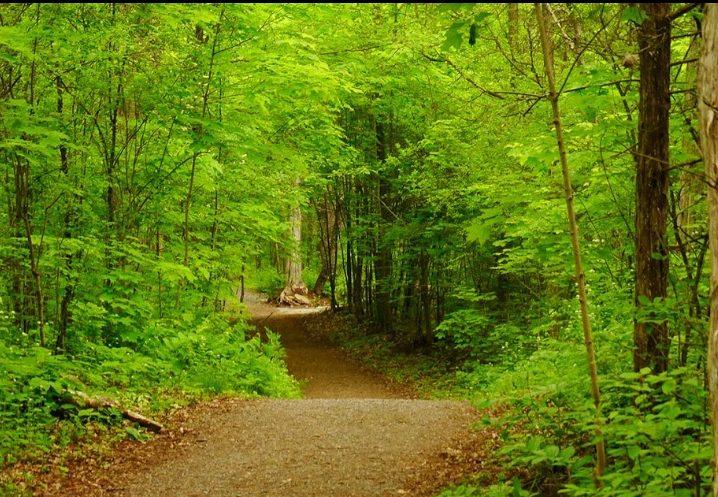 Parrott's Bay Trail