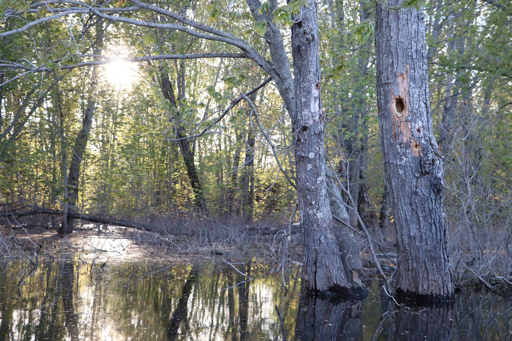 Salmon River Kayak Spring1.jpg