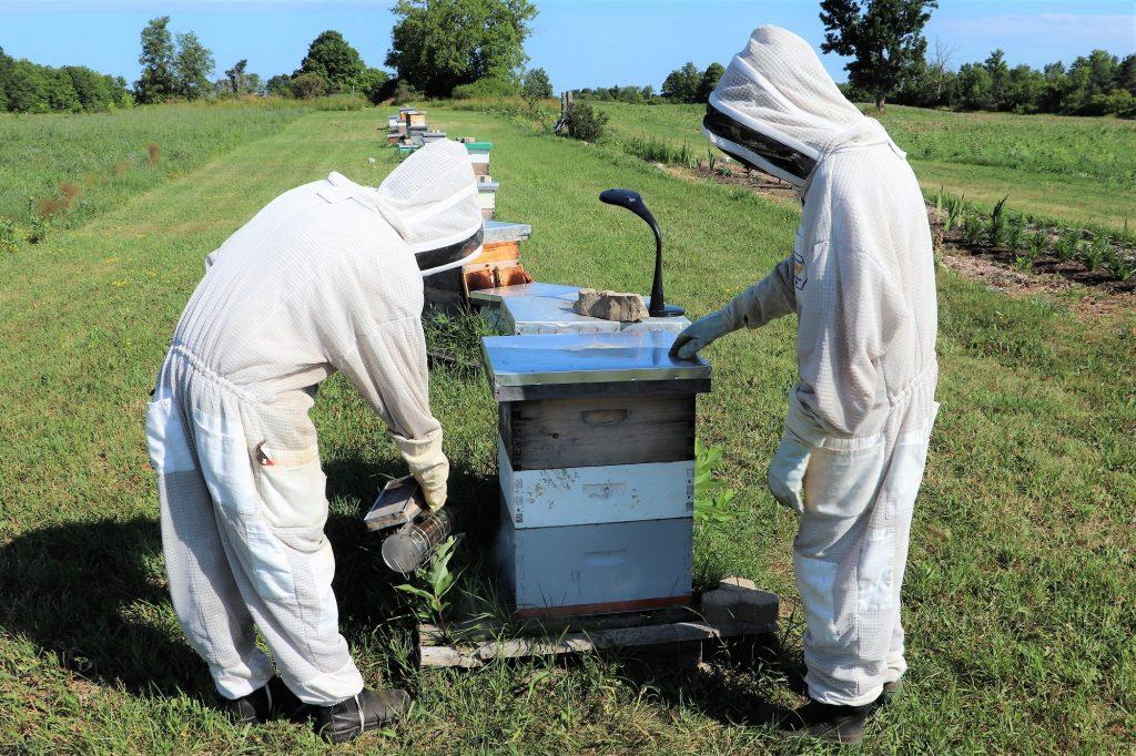 Preparing the Hive