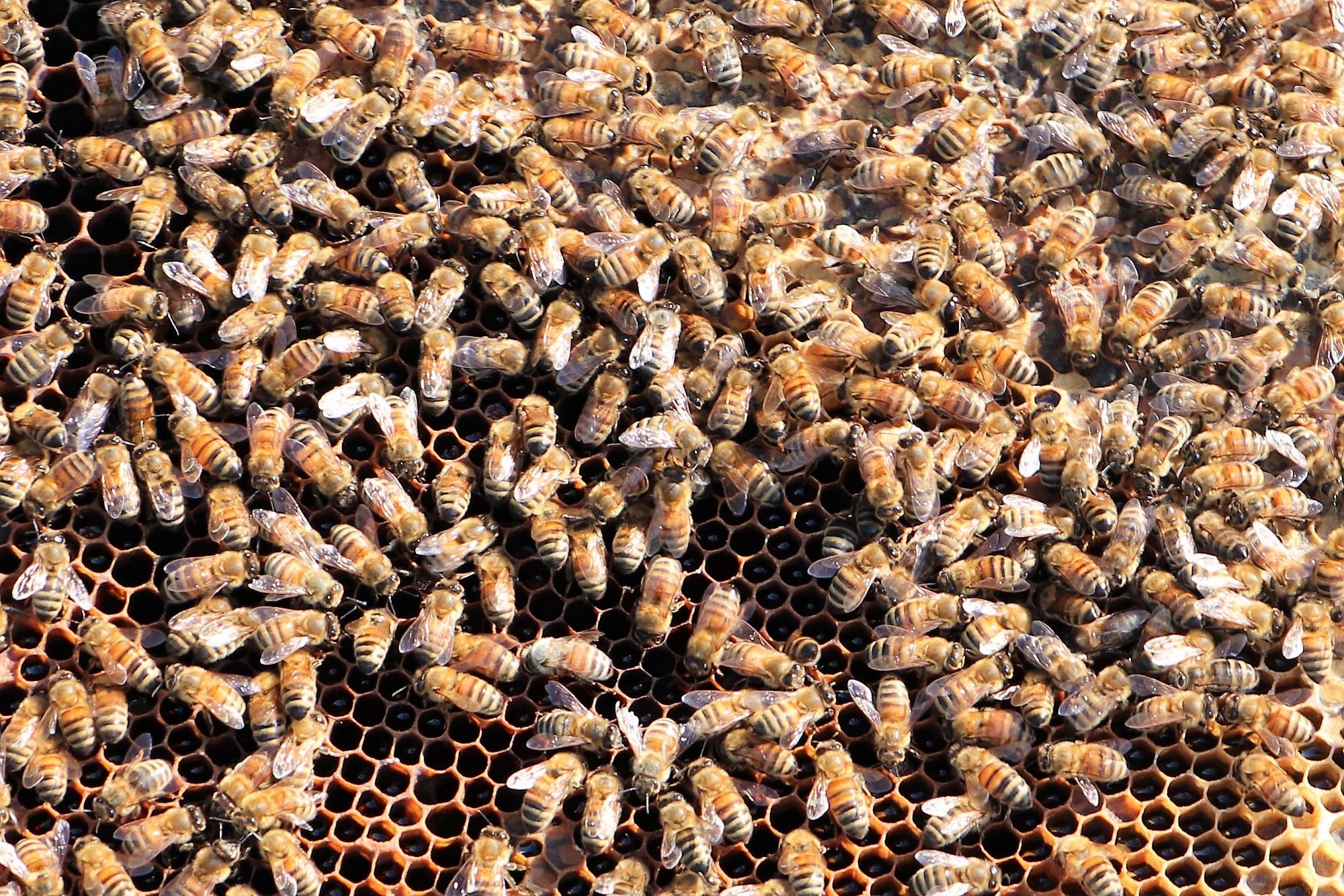 0. Bee Spot - Bees Web.jpg