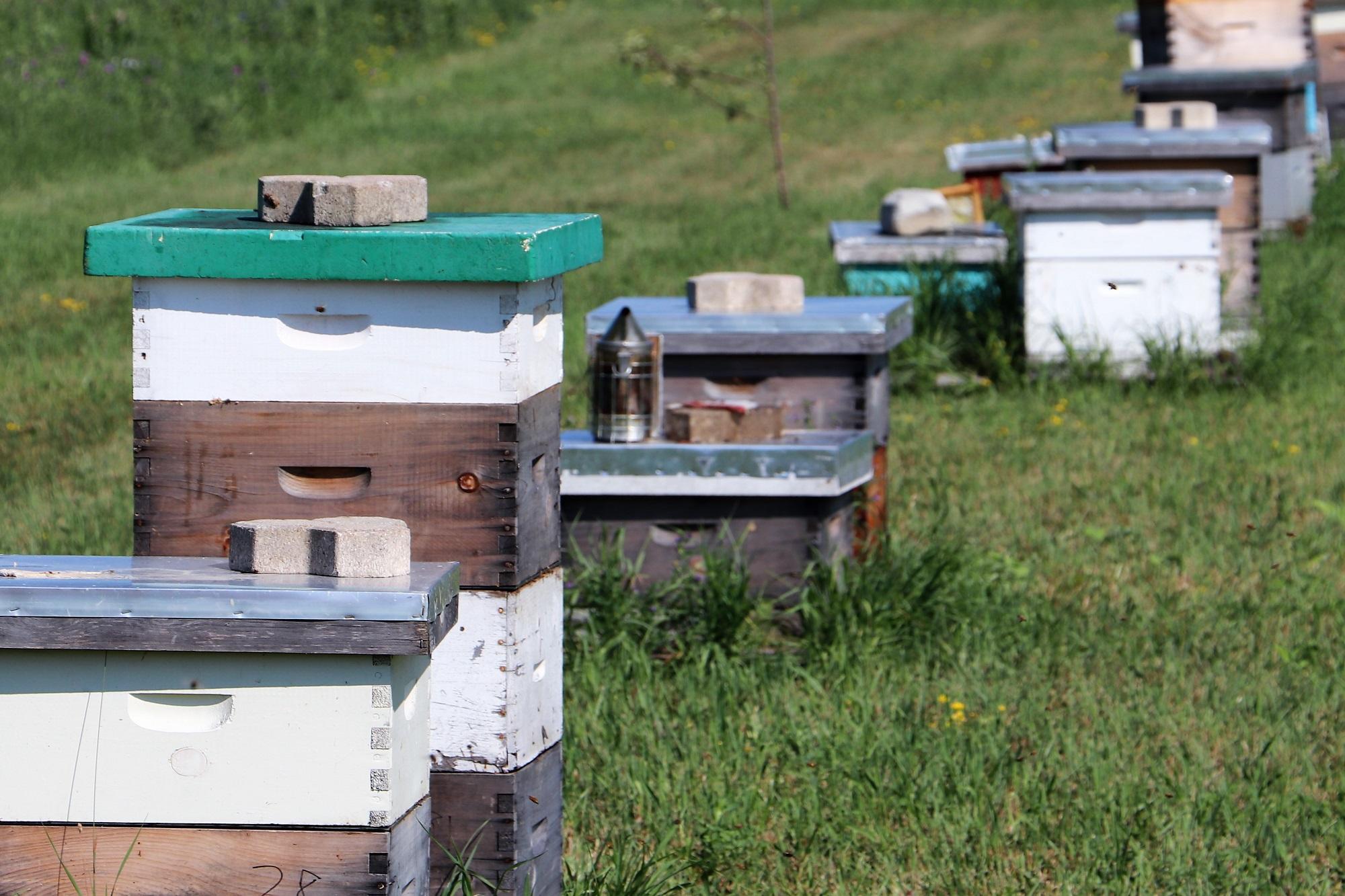 2a. Bee Spot - Hives Web.jpg