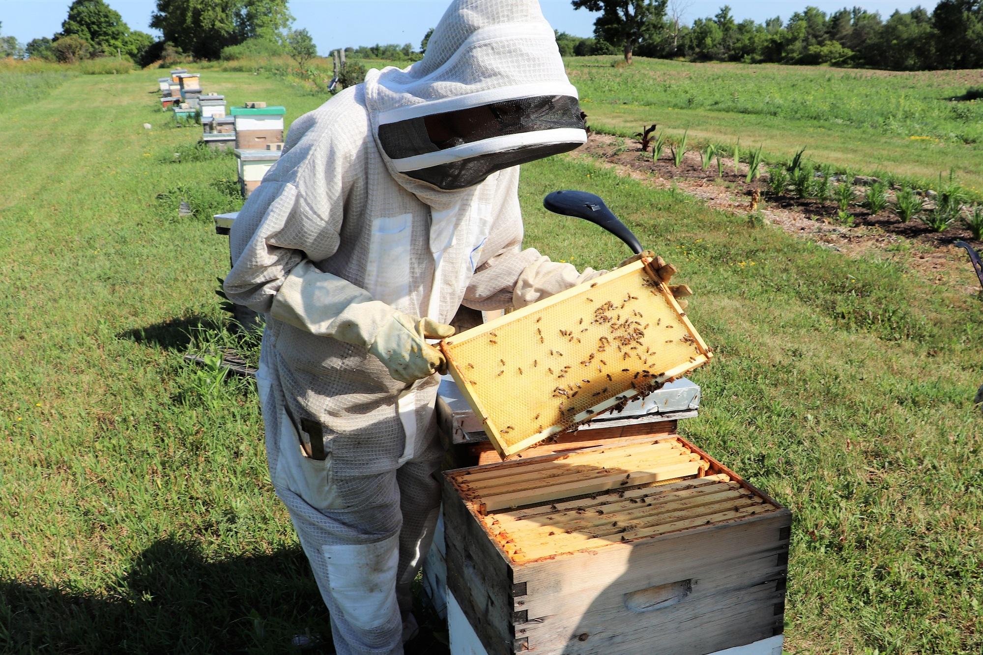 4. Bee Spot - Opening Top Layer Web.jpg