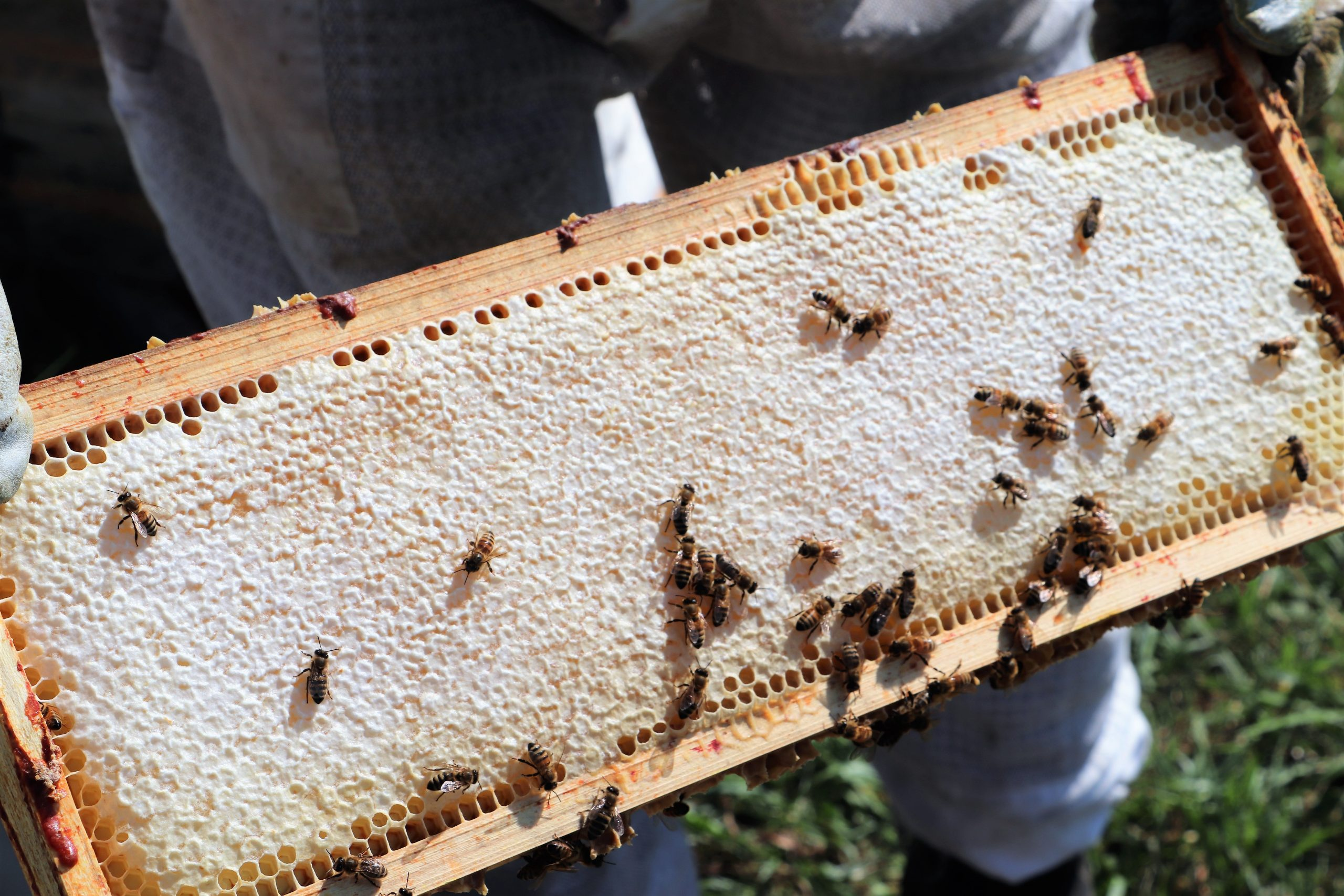 5. Bee Spot - Middle Layer Web.jpg