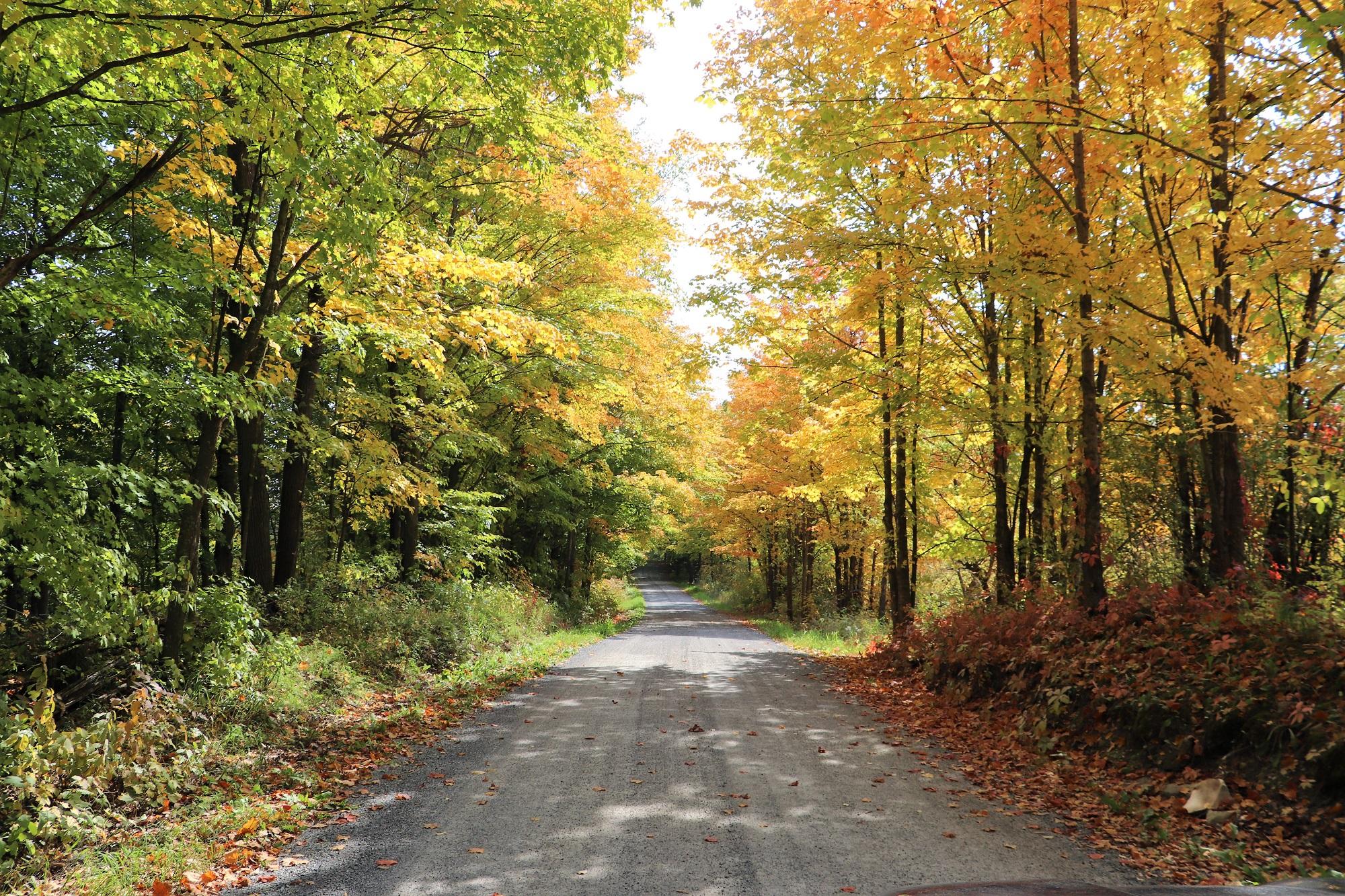 5. Pochett Road near Tamworth.jpg