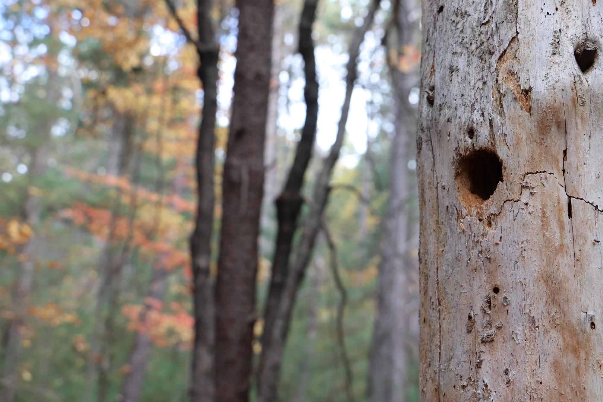 CountyForestFall30.jpg
