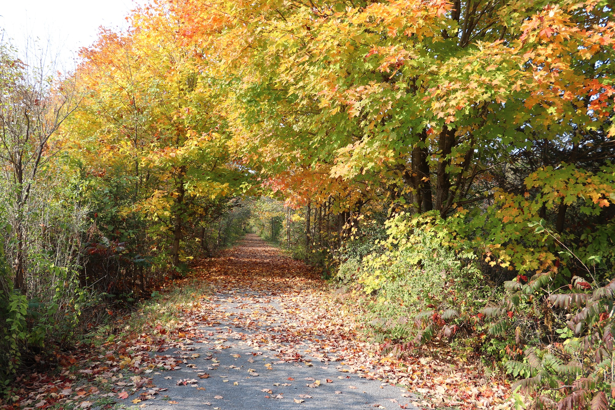 5aaa. Trail with Leaves.jpg