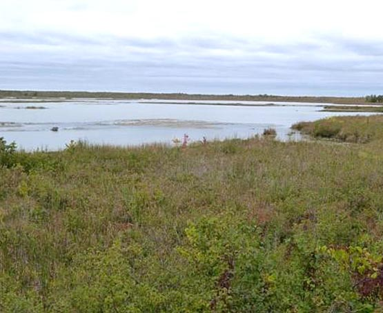 Camden Lake Provincial Wildlife Area