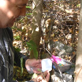 Geocaching in L&A