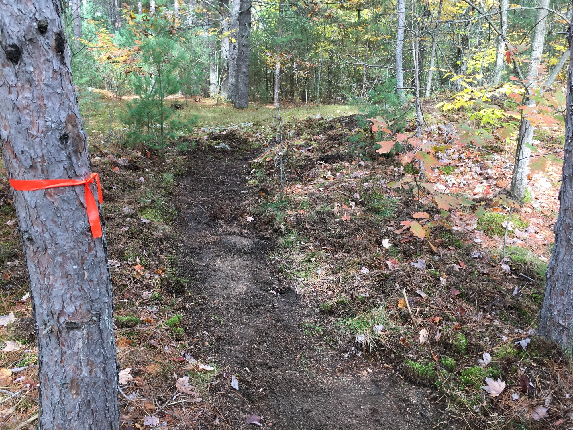 L&A Forest Trails mid buildl.jpg
