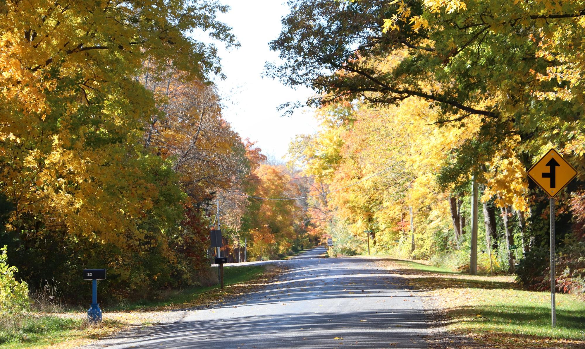 Maple Road.jpg