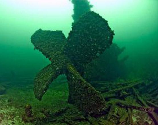 Scuba Diving in L&A