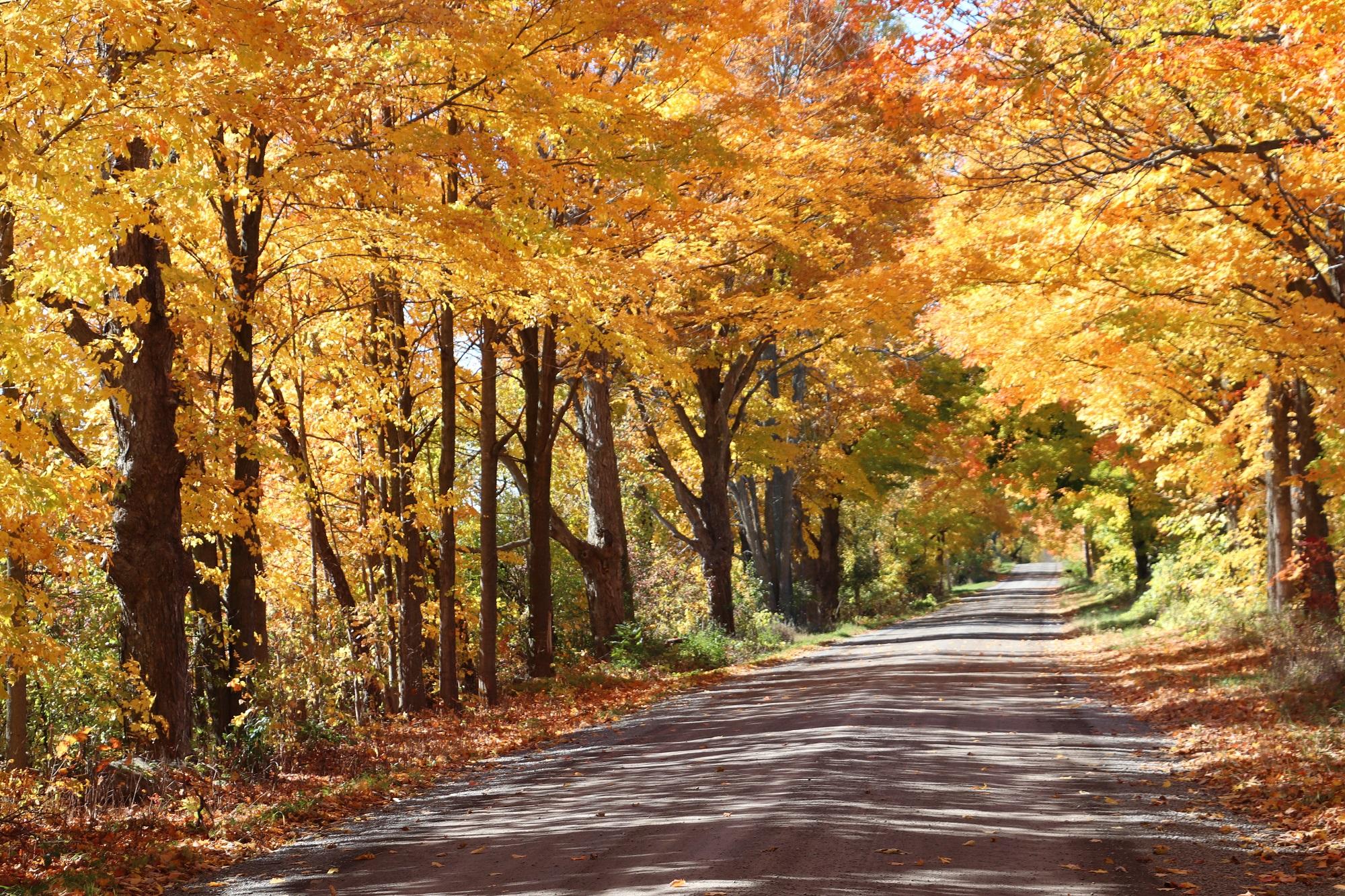 Switzerville Road