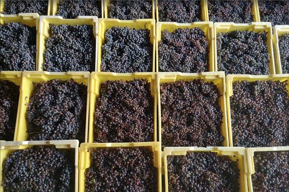 Longrid Estates Vineyards & Winery
