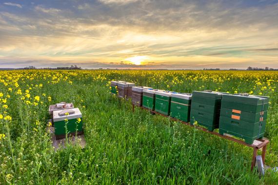 Barnyards, Bees and Birds